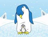 Pinguim com seu bebê