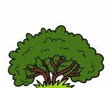 Um arbusto
