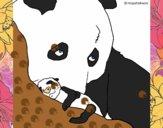 Urso panda com a sua cria