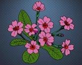 Desenho Primula pintado por Marya
