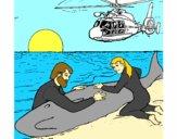 Resgate baleia