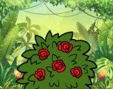 Desenho Rosa-canina pintado por LLL321