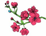 Desenho Filial da cereja pintado por luism