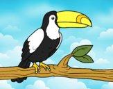 O tucano