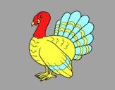 Turquia comum