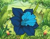 Desenho Flor de narciso pintado por thauis