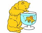 Gato a olhar para o peixe