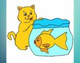 Gato e peixe