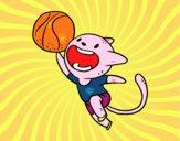 Gato basquete