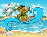 Cão surfing