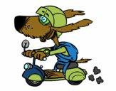 Cão motociclista