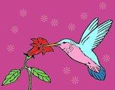 Colibri e uma flor