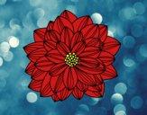 Flor de dahlia