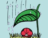 Joaninha protegida da chuva