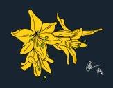 Desenho Flores do lilium pintado por wagnermoys
