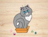 Desenho Gatinho em uma caixa pintado por ImShampoo