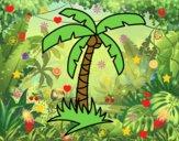 Palmeira tropical
