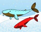 Desenho Baleias pintado por Davi1203