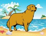 Desenho Cão Golden retriever pintado por ImShampoo