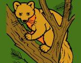Marta europeia na árvore