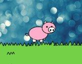 Porco por um campo