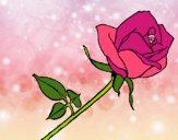 Desenho Rosa pintado por Gisla