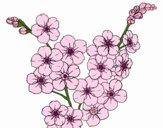 Desenho Flor de cerejeira pintado por Silma