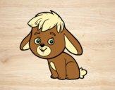 Um coelho de campo
