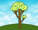 Um pinheiro