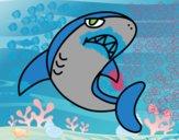 Tubarão nadando