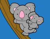 Mãe coala
