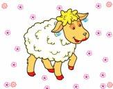 Desenho Ovelha comum pintado por colori