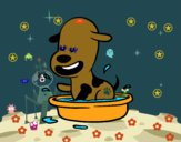 Um cachorro na banheira