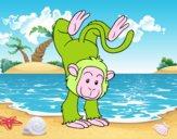 Equilibrista macaco