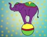 Desenho Elefante equilibrista pintado por eluane