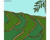 Desenho Campo de arroz pintado por ceciliaz