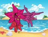 Flores do lilium