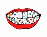 Boca e dentes