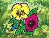 Desenho Flores de amor-perfeito pintado por ImShampoo