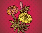 Desenho Flor da maravilha pintado por ceciliaz