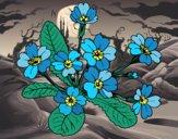 Desenho Primula pintado por ceciliaz
