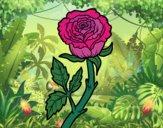 Desenho Rosa selvagem pintado por ceciliaz