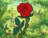 Desenho Rosa selvagem pintado por ImShampoo
