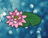 Desenho Uma flor de lotus pintado por ImShampoo