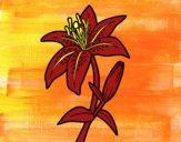 Desenho Açucena pintado por ceciliaz