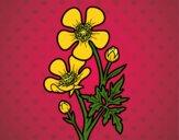 Desenho Flor ranunculus acris pintado por ceciliaz
