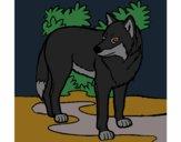 Desenho Lobo pintado por pantu136