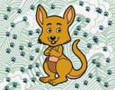 Um canguro