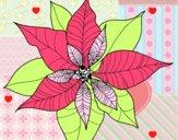 Flor de poinsétia