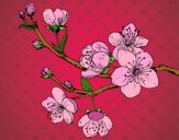 Desenho Filial da cereja pintado por Sillvana